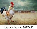 Drawing Cock  Digital Painting...