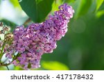 beautiful purple lilac on the... | Shutterstock . vector #417178432