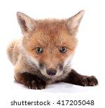 Stock photo little fox kit 417205048