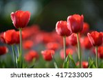 amazing nature of red tulips... | Shutterstock . vector #417233005