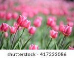 amazing nature of pink tulips... | Shutterstock . vector #417233086