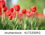 flowers background. beautiful... | Shutterstock . vector #417233092