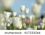 flowers background. beautiful... | Shutterstock . vector #417233266
