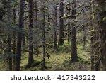 rain forest in kodiak alaska... | Shutterstock . vector #417343222