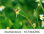 bees find nectar from flowers ... | Shutterstock . vector #417366346