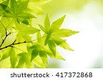 green leaf of japanese maple | Shutterstock . vector #417372868