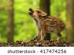 baby wild boar calling | Shutterstock . vector #417474256