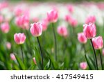 amazing nature of pink tulips...   Shutterstock . vector #417549415