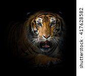 close up face tiger isolated on ... | Shutterstock . vector #417628582