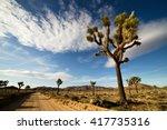 Desert Road With Joshua Trees...