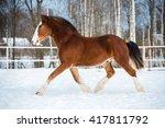 Bay Color Draft Horse Runs Tro...