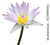 Purple Lotus Flower Isolated O...