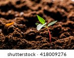 Small photo of Growing Young Green Corn Seedling Sprouts in Cultivated Agricultural Farm Field