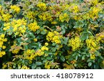 Small Yellow Flowers Mahonia I...