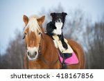 Draft Horse And Black Tricolor...