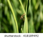 Fly On Grass Blade
