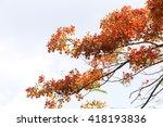 Tree Red Flower