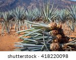 pineapple field. young... | Shutterstock . vector #418220098
