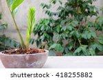 Plant Pot In Garden