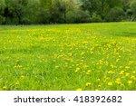 dandelion in a meadow | Shutterstock . vector #418392682
