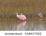 Roseate Spoonbills With A...