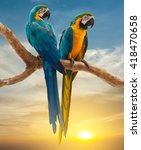 Two Parrots With Sunset...