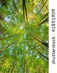 sunlight rays are going through ... | Shutterstock . vector #41851909