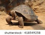 Stock photo giant tortoise geochelone gigantea 418549258