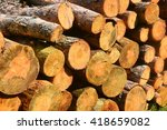 Wooden Wall Of Timber Outdoors