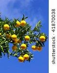 Oranges in blue sky. - stock photo