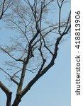Three Ways Of Tree Trunk With...