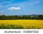 Yellow Field Rapeseed