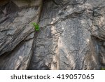 Little Plant Grow Out Of Rock