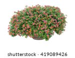 Flower Bush With Pot Isolated...