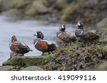 Group Of Four Male Harlequin...