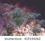 Impressionist Cow Parsley With...