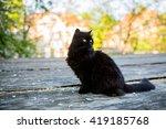 Stock photo black cat standing 419185768