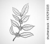 coffee plant with coffee leaf   Shutterstock .eps vector #419291035