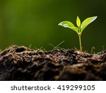 close up young plant growing... | Shutterstock . vector #419299105