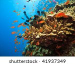 stony coral colony and soldier... | Shutterstock . vector #41937349