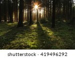 Stock photo forest trees with sunlight pouring through at sunset in the woods on ground illuminating tree 419496292