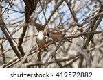 zebra finches nuzzling in... | Shutterstock . vector #419572882