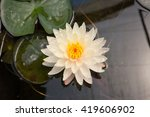 lotus | Shutterstock . vector #419606902