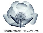 x ray image of a flower ... | Shutterstock . vector #419691295