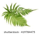Fern Leaves On White Background