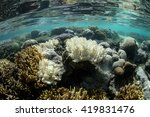 Small photo of Corals begin to bleach in Raja Ampat, Indonesia. Bleaching occurs when corals are stressed by environmental conditions and expel their symbiotic algae, called zooxanthellae.