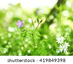 sunny flower field in spring... | Shutterstock . vector #419849398