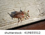 may beetle on the wood | Shutterstock . vector #419855512