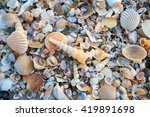 Sea Shells On Sand  Summer...