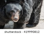 portrait of a cute and fluffy... | Shutterstock . vector #419990812